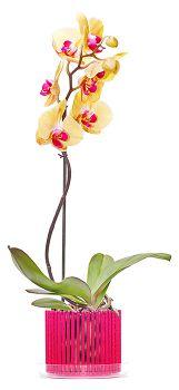 kashpo-orchidei-1